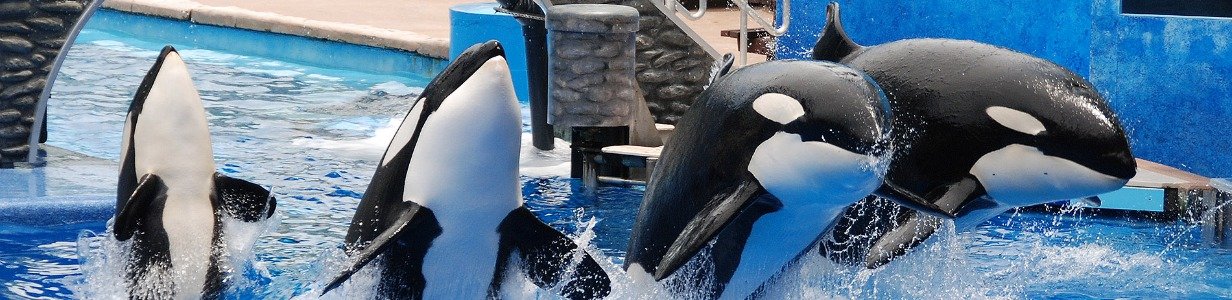 What Our Treatment of Orcas Tells Us About Our Societal Healthe
